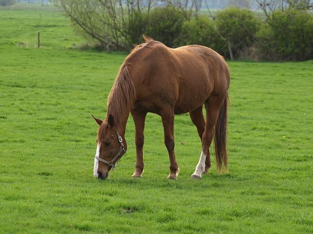 horse-324249_640