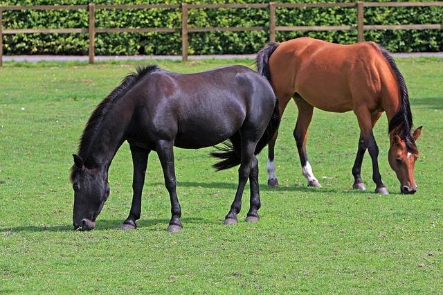 horses-164056_640
